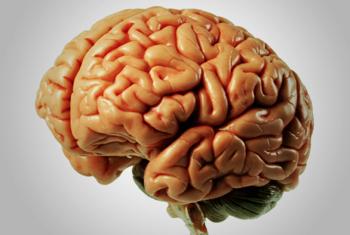 5 moduri in care simturile te mint