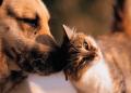Pisicile si cainii nu sunt programati genetic sa se urasca