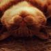 Pisicile trateaza depresia psihologie