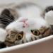 Top 10 pisici ajunse celebritati pe YouTube
