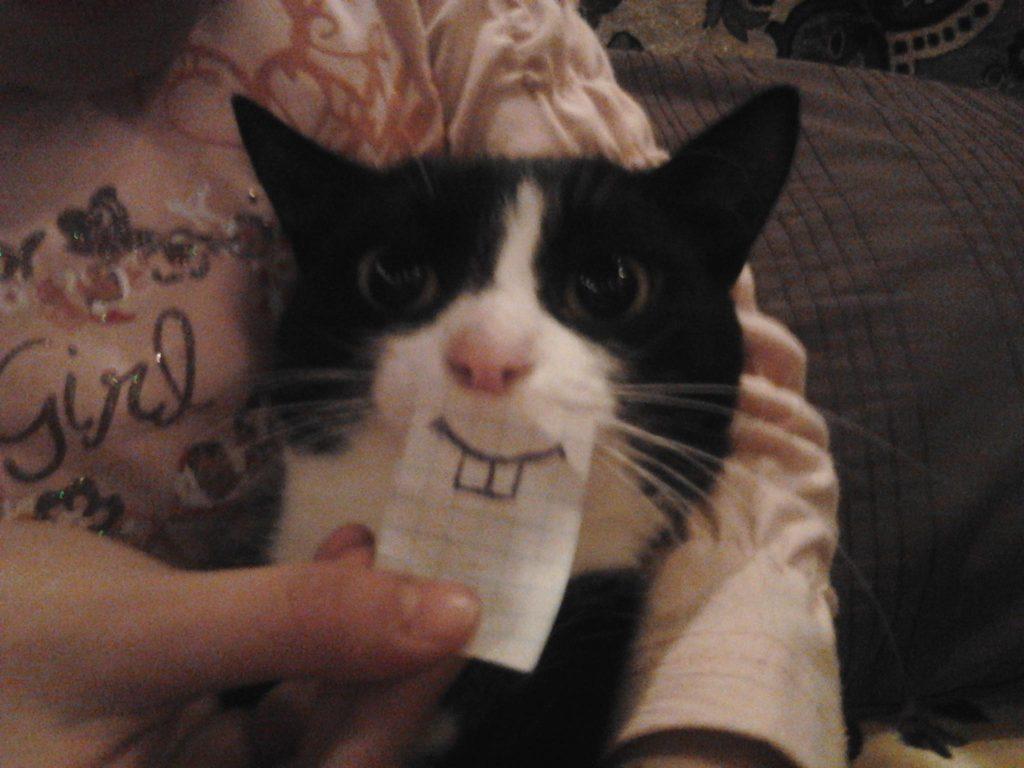 pisicile trateaza depresia