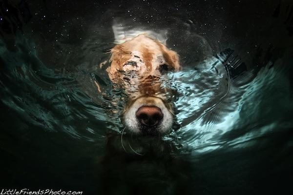 caini sub apa