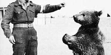 Povestea lui Wojtek, ursul din armata poloneza