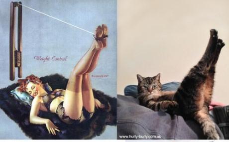 pisici si modele pinup