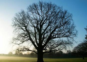 copacii dorm studiu stiinta ecologie