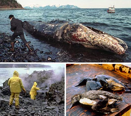 Exxon Valdez - dezastre ecologice