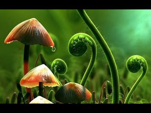 Plantele pot vorbi