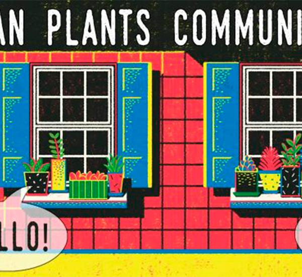 comunicarea intre plante ecologie raftul verde
