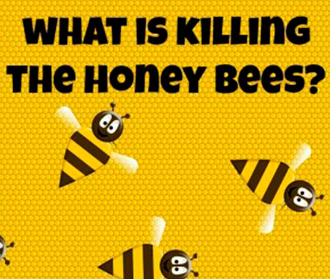 Ce s-ar intampla daca albinele ar disparea